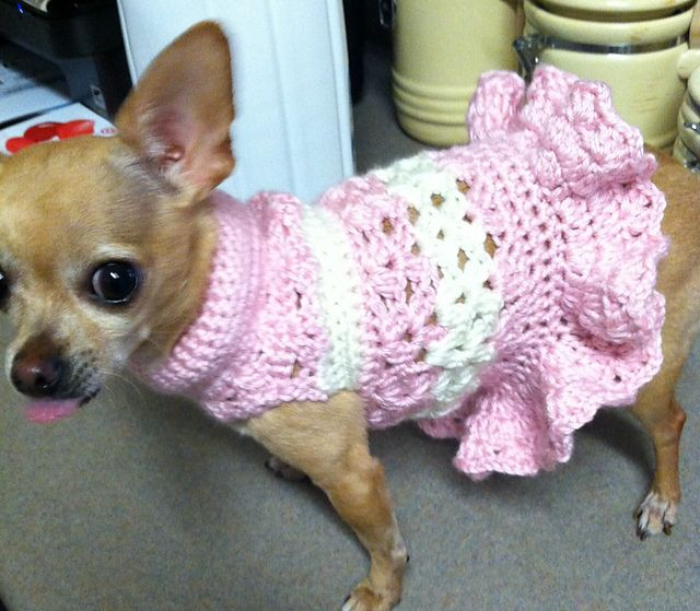 crochet dog sweater patterns for beginners ajbhmym